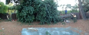 Panoramic taken by Kyle. It broke one side of the fence and wrapped around and broke another part