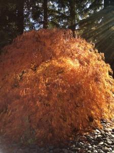 fall foliage decorations