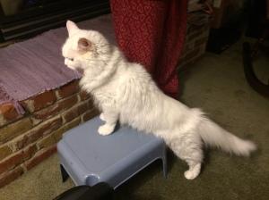 Statue Kitty