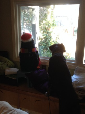 Chester (penguin) and Sienna waiting for Santa