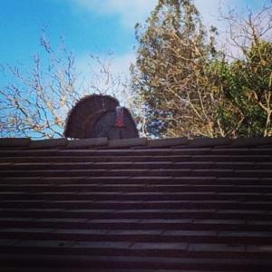 turkey on roof