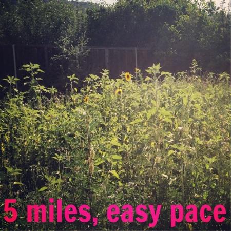 run trail sunflower