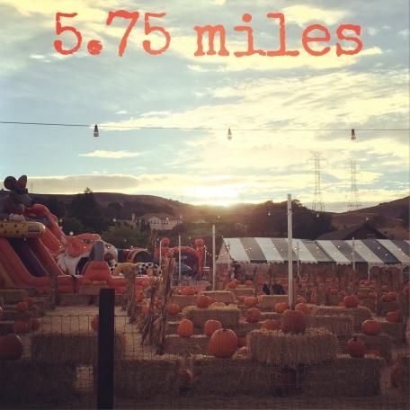 run pumpkin patch